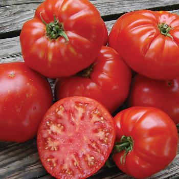 Kanner Hoell Tomato