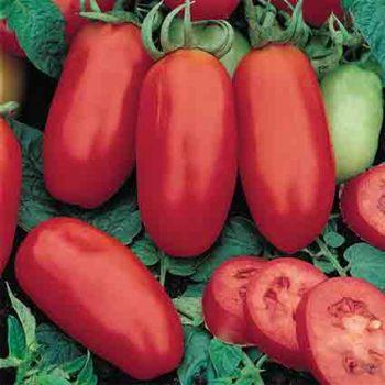 San Marzano Tomato
