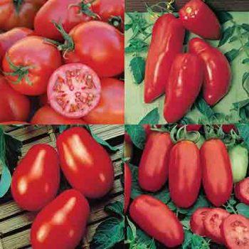 Paste Tomato Collection