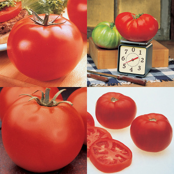 Main Crop Tomato Collection