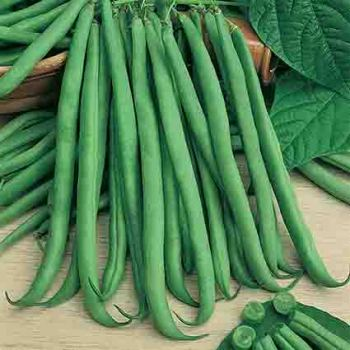 Slenderette Bush Bean