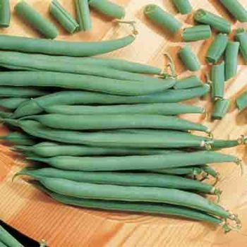 Topcrop Bush Bean