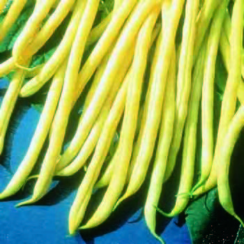 Cherokee Wax Bean