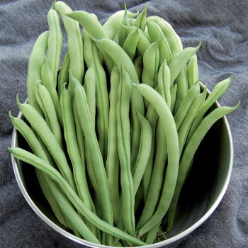 Ideal Market Pole Bean