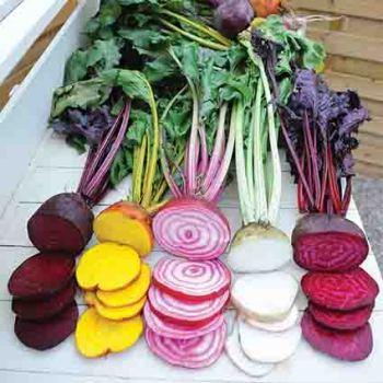 Rainbow Beet Mix