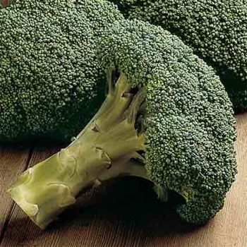 Packman Hybrid Broccoli - 100 seeds