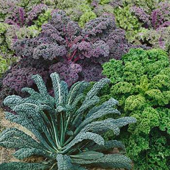 Garden Blend Kale