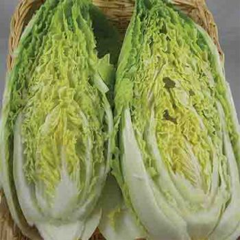 Michihili Chinese Napa Cabbage