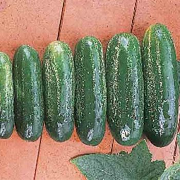 Homemade Pickles Cucumber