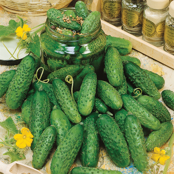 Picklers Pride Mix Cucumber