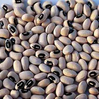 California Black Eye Cowpeas