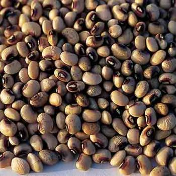 Pinkeye Purple Hull Bvr Cowpeas