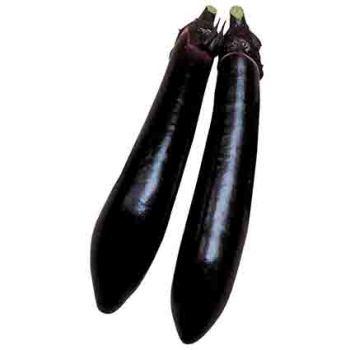 Millionaire Hybrid Eggplant