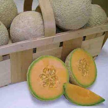 Sugar Cube Melon