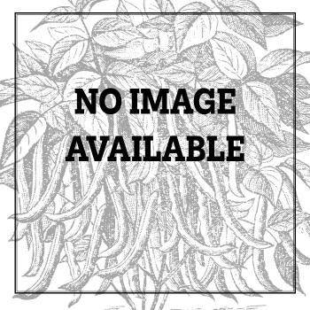 Tendergreen Mustard Greens