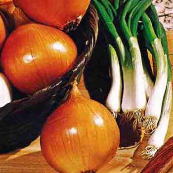 Giant Yellow Sweet Spanish Onion