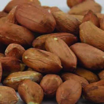 Jumbo Virginia Type Peanut