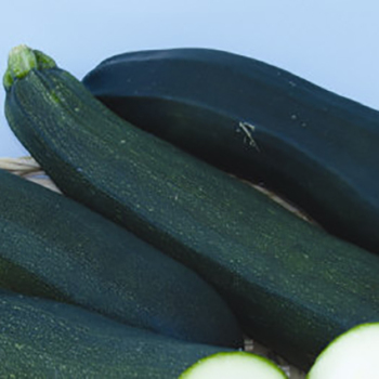 Dark Green Zucchini Squash - 40 seeds