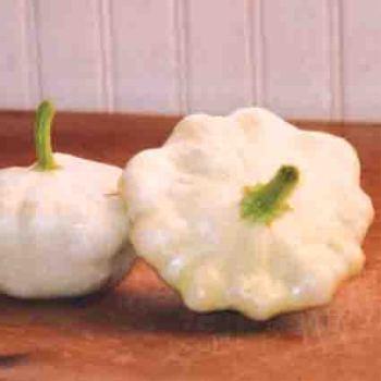 Early White Bush Scallop Squash