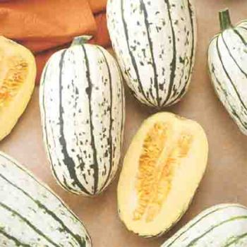Bush Delicata Winter Squash