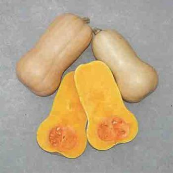 Waltham Butternut Squash - 30 seeds