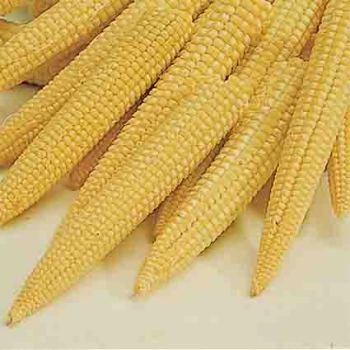 Baby Bonus Hybrid Sweet Corn