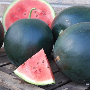 Black Tail Mountain Watermelon