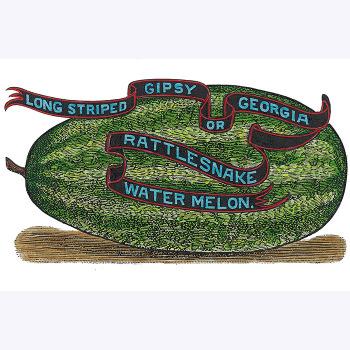 Georgia Rattlesnake Watermelon