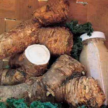 Maliner Kren Horseradish
