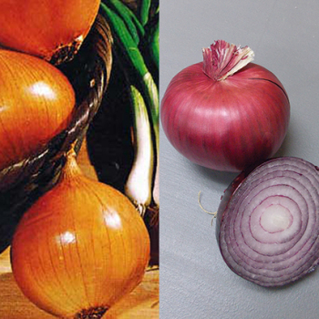 Onion Plant Offer - 1 Bunch Of 3 Varieties