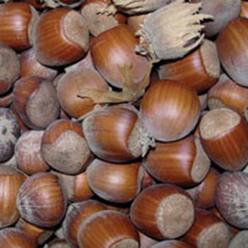 Jefferson European Hazelnuts