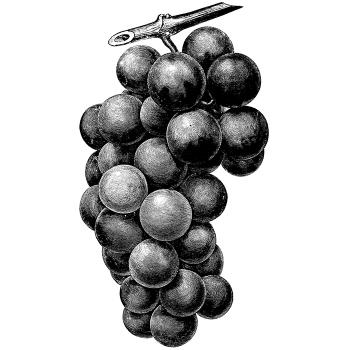 Grape Special