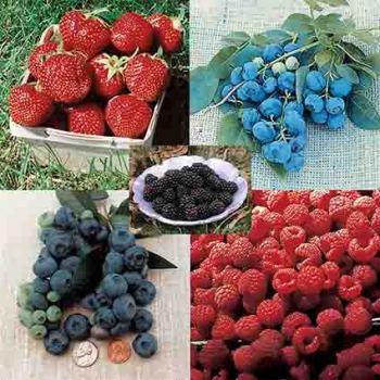 Complete Berry Garden