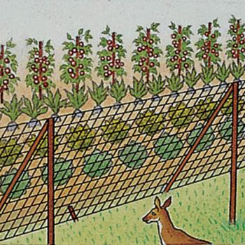 Deer X Fencing