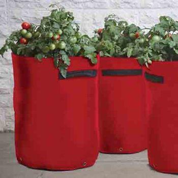 Tomato Patio Planters