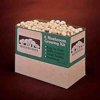 White Button Mushrooms 12 Pound Kit