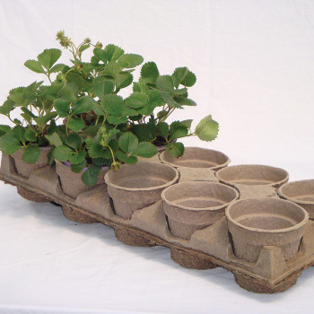 Carry Tray For Eco Grow Pot 3.75""