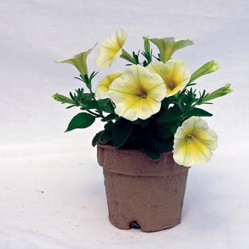 Ecogrow Enviro-Grow Pots