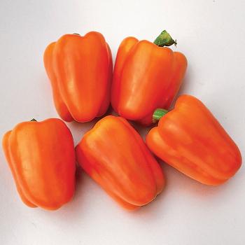 Gourmet Bell Pepper