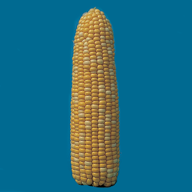 Butter & Sugar Hybrid Sweet Corn