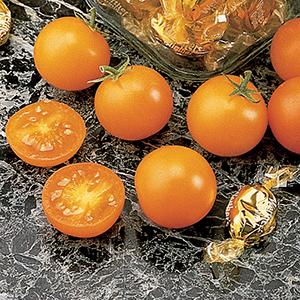 Cherry Tomato Plants