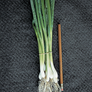 Scallion Seeds
