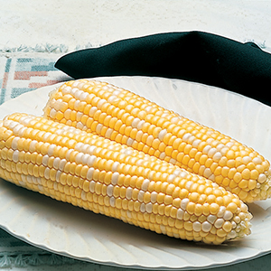 Sweet Corn- Sugary Enhanced