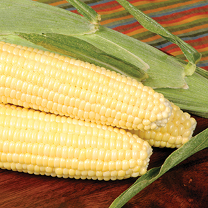 Sweet Corn- Super Sweets