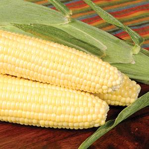 Sweet Corn- Super Sweets (sh2)