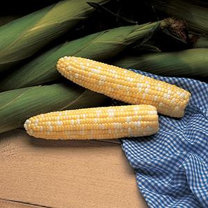 Sweet Corn- Synergistic