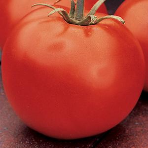 Red Main Crop