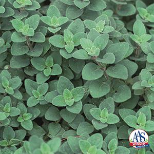 AAS Winning Herbs