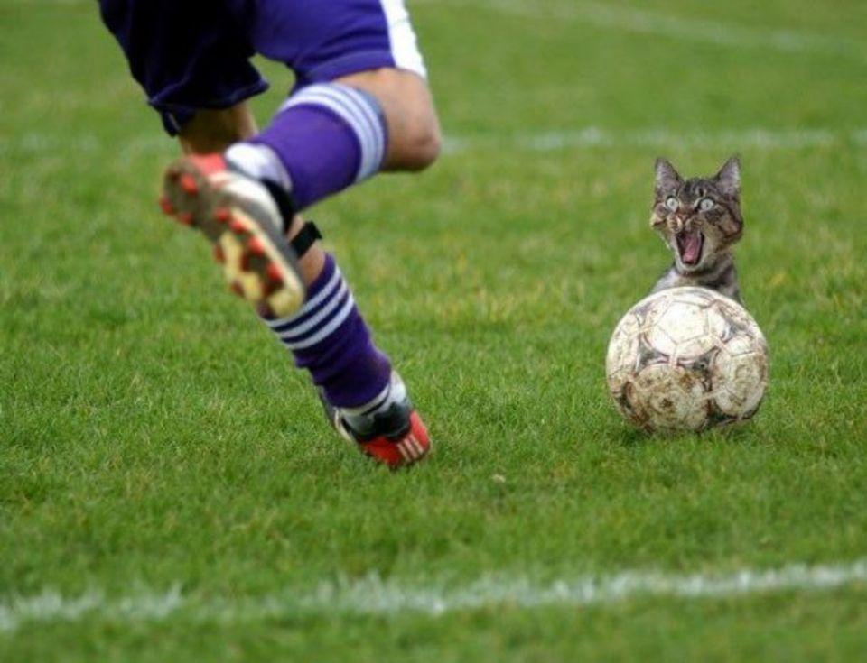 Кот настоящего футболиста никогда не спит клубком