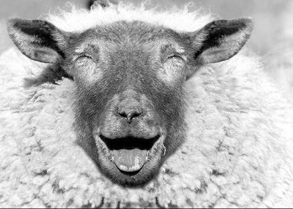 Открытки космонавтами, прикольная картинка овец